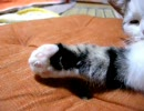 【ニコニコ動画】【ひげ猫一家】ギュ~ッみりんを解析してみた