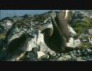 カモメと戦うペンギンのヒナ