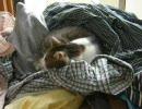 【ニコニコ動画】ネコがカメムシに天の裁きを受けたんですっ!><;を解析してみた