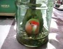 【ニコニコ動画】うちの鳥がえさビンに引きこもった。を解析してみた