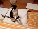 【ニコニコ動画】家猫日和 詰め合わせ12を解析してみた