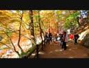 【ニコニコ動画】250TR のんびりバイクツーリングvol10 秋の風景編(香嵐渓-愛知散策前編)を解析してみた