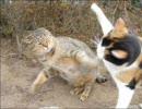 猫虐待?期待しないで Vol.1