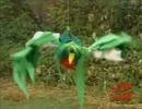 音声で楽しむどうでしょう「中米・コスタリカで幻の鳥を激写する!」