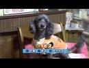 【今週のペット】ボス(6歳・オス)&メロン(2ヵ月・メス)