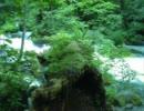 作業用BGM「小川の流れ」自然音