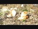 【野良猫】河原に住んでいる野良猫を撮影してみた その6