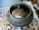 【ニコニコ動画】犬釜を解析してみた