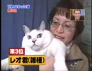 世界のデブ猫BEST3