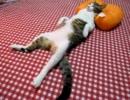 おっさんのように寝る猫