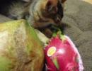 謎の果物vs猫 thumbnail
