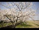 【UTAUカバー】花は桜 君は美し【実音とわ