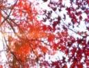 Spring flower autumn orange