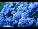 コミュ限で椿屋四重奏の紫陽花を歌ってみた