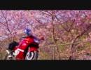 【ニコニコ動画】ZZR400で行く さくらツーリング in河津町を解析してみた