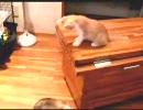 子猫 VS フェレット 完全版? ROUND2