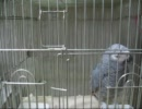 第90位:緊急地震速報のアラームを覚えちゃった鳥 thumbnail