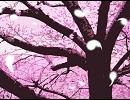 【東方自作アレンジ】死霊の夜桜【神霊廟1面道中】