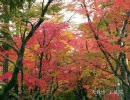 そうだ京都、行こう thumbnail