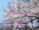 お花見マイクリレー2011 【魂音泉】