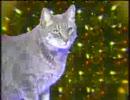 ネコの鳴き声でクリスマスソング