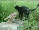 仲良しすぎるフクロウとネコさん