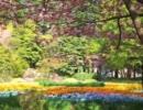 【ニコニコ動画】仙台中心部の桜をお届けします。その2【復興応援動画】を解析してみた