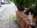 近所の子ネコ!寝起きの可愛いグレムリンみたいな顔です(笑)