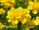第72位:【オリジナル】MariGold【ピアノトランス】