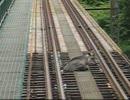 【ニコニコ動画】鹿が線路に居座る!を解析してみた