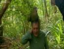 【ニコニコ動画】世界で唯一飛べないオウム カカポを解析してみた