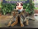 【ニコニコ動画】【ゆっくり雑談】タイ旅行に行きました part2を解析してみた
