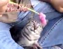 【ニコニコ動画】けしからん!かわいさの野獣達11【家族と暮らす幸せ】を解析してみた