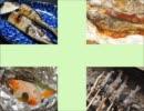 素敵なお母さんになりたい私が料理してみた【魚料理編】