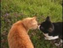 ~きょうもあしたも、ねこねこ動画16~ おらほの猫ら・プチ