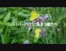 【ニコニコ動画】三尺バーベナーに集まる蝶たち.wmvを解析してみた