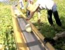 オーストラリア農業日記