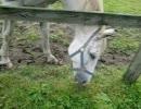 【名馬の】ビワハヤヒデ【牧場巡り】
