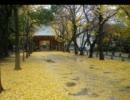 雨の八幡神社