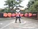 【踊ってみた】純情☆ファイター【アグー】 thumbnail