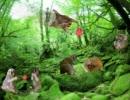 【ニコニコ動画】スローロリスくんの棲む森 + BB集を解析してみた