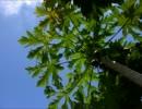 【ニコニコ動画】【インスト】Vegetation【オリジナル曲】を解析してみた