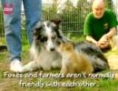【ニコニコ動画】オッサンとわんわんおとキツネを解析してみた