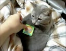 【ニコニコ動画】復刻版ビックリマンチョコを買ったので早速シールを猫達に貼ってみたを解析してみた
