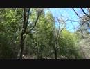 【ニコニコ動画】【自然】春風に揺れる谷間の竹林【FullHD】を解析してみた
