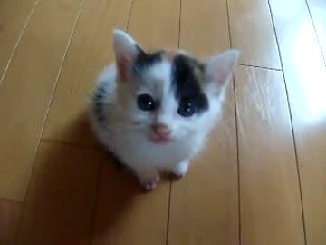 登って甘えたい子猫