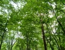 【ニコニコ動画】作業用環境音 森を解析してみた