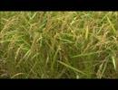 【ニコニコ動画】うえだゆうじ【ひょうたんからコトバ】お米を数えろどこまでも♪を解析してみた
