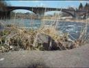春の河原の気分をお届けする動画(広瀬川・ネコヤナギ)