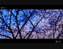 【ニコニコ動画】【NNI】 夜桜 【春ニカ2012】を解析してみた